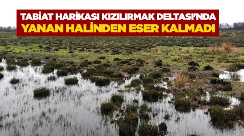 Tabiat harikası Kızılırmak Deltasında yanan halinden eser kalmadı