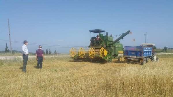 Adana'da arpa ve buğday hasadı başladı