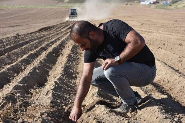 Bitliste fasulye ekimine başlandı
