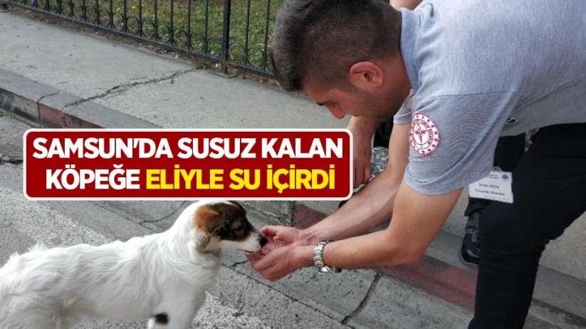 Samsun'da susuz kalan köpeğe eliyle su içirdi