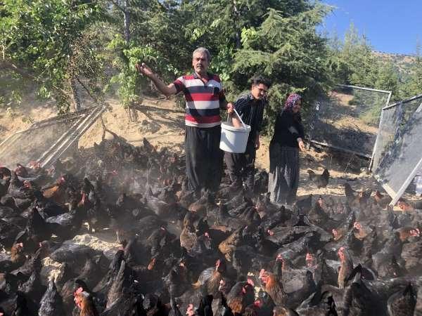 Binlerce tavuk gençlerin geleceği oldu