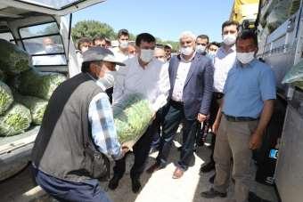 3 bin 500 kişinin yevmiyeyle çalıştığı ovada fasulye hasadı başladı