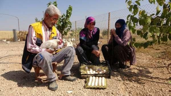 Hobiyi, çiftliğe çeviren çift, 'Yumurta' ile para kazanmaya başladı