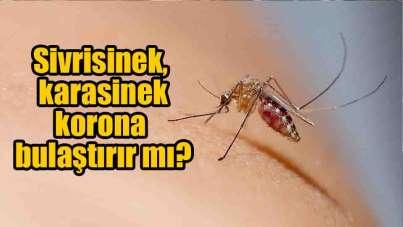 Sivrisinek, karasinek, böcek ve keneler korona bulaştırır mı?