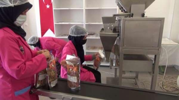 10 kadının kurduğu kooperatif 25 hemcinslerine ekmek kapısı oldu