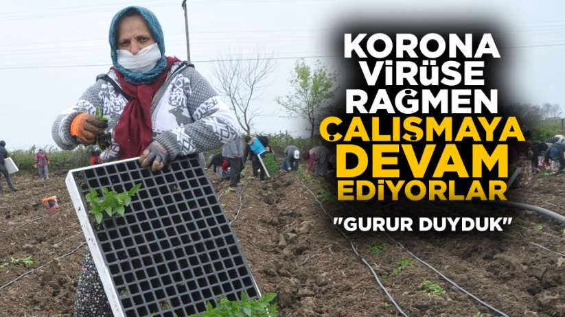 Samsun'da tarım işçileri çalışmaya devam ediyor