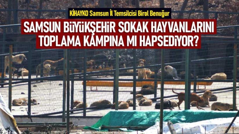 Birol Benuğur: Samsun Büyükşehir, sokak hayvanlarını toplama kampına mı hapsediyor?