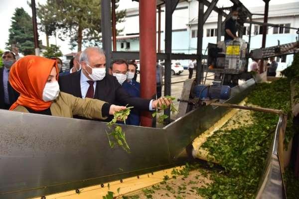 Başkan Zorluoğlu çay alım fabrikasını gezdi