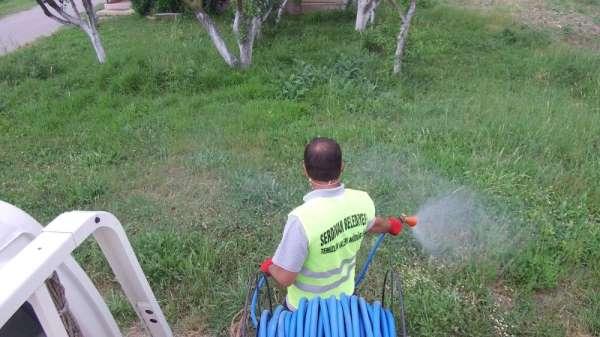 Serdivan'da ilaçlama çalışmaları hız kazandı