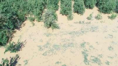 Afet bölgesinde binlerce dönüm tarım arazisi sular altında...