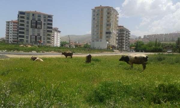 Çiftçi proje başvuruları 7 Temmuz'a uzatıldı