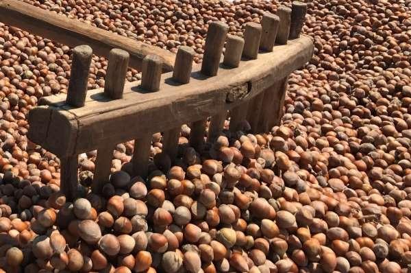 KFMİB: '2020 yılı tahmini fındık rekoltesi 670 bin ton'