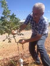 Malatya'da antepfıstığı yaygınlaştırılıyor
