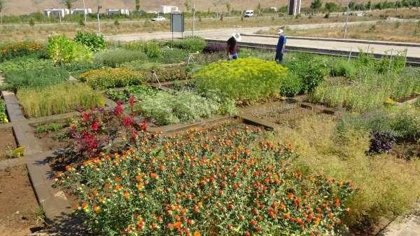 (Özel) MŞÜ'den ilaç sanayisi ve tarıma katkı çalışması