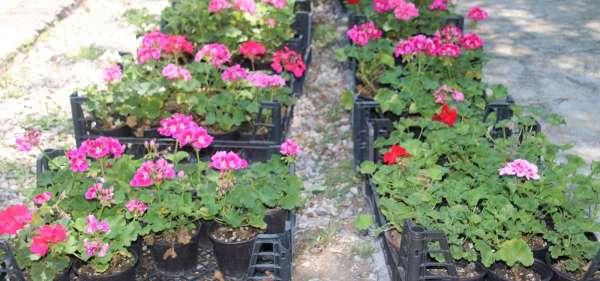 Çankayada çiçek satışına büyük ilgi