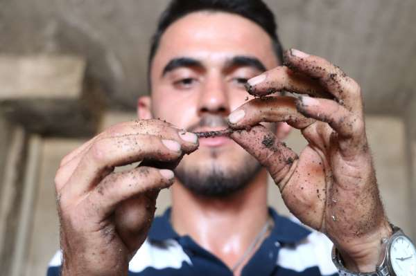 İnternette gördü: 1 milyon solucanla aylık 1 ton gübre üretiyor