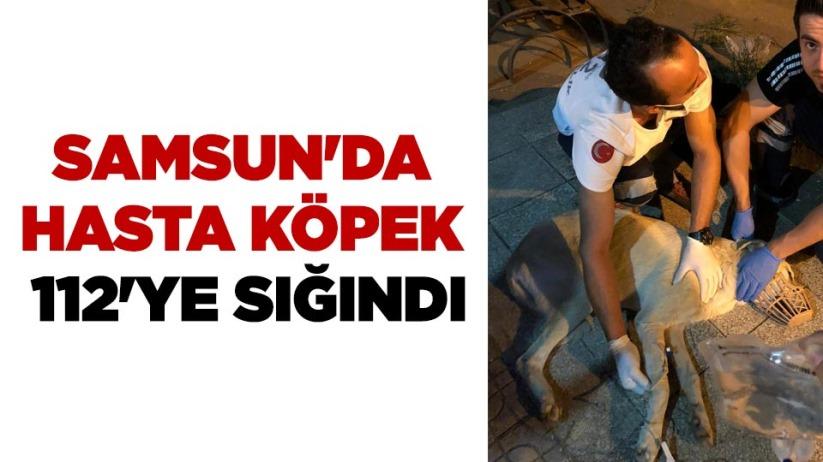 Samsun'da hasta köpek 112'ye sığındı