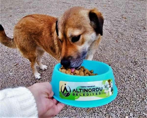 Altınordu'da sokak hayvanları düzenli olarak besleniyor