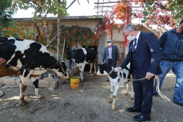Şahinbey'de hayvan yetiştiricilerine destek sürecek