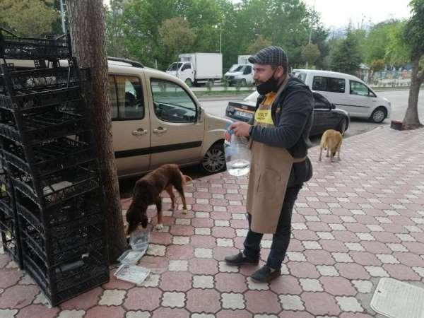Sokağa çıkma yasağında sokak hayvanlarını unutmadı