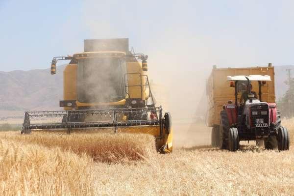 Kuraklık hasadı başlayan buğdayı da vurdu, rekolte yüzde 70lere kadar düştü