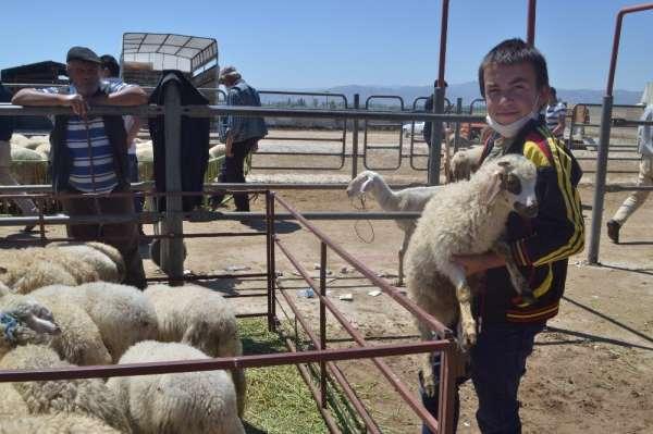 Afyonkarahisar'daki canlı hayvan pazarlarında kurban hareketliliği başladı