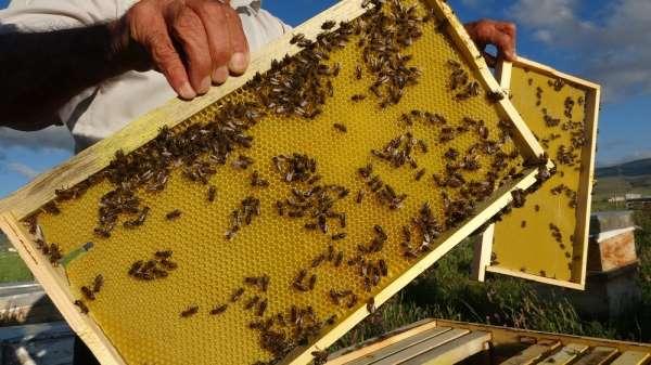 Ardahan'da arılar kayıp; arıcılar endişeli
