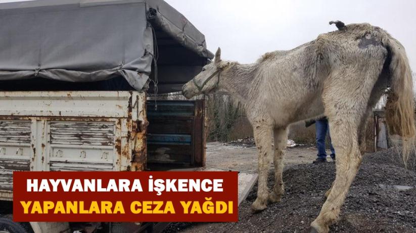 Samsunda hayvanlara işkence yapanlara ceza yağdı