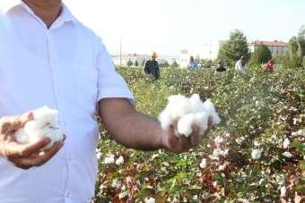 (Özel Haber) Gaziantep'te beyaz altın bereketi