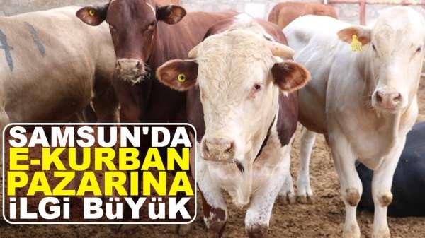Samsun'da e-kurban pazarına ilgi büyük