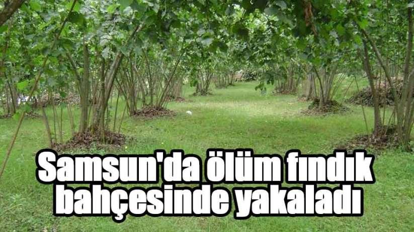 Samsun'da ölüm fındık bahçesinde yakaladı