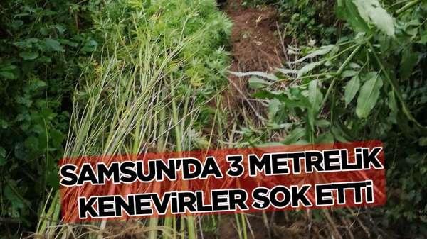 Samsun'da uyuşturucu operasyonu: 2 gözaltı