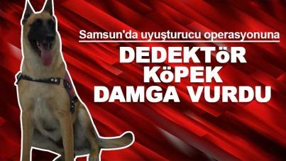 Samsun'da uyuşturucu operasyonuna dedektör köpek damga vurdu