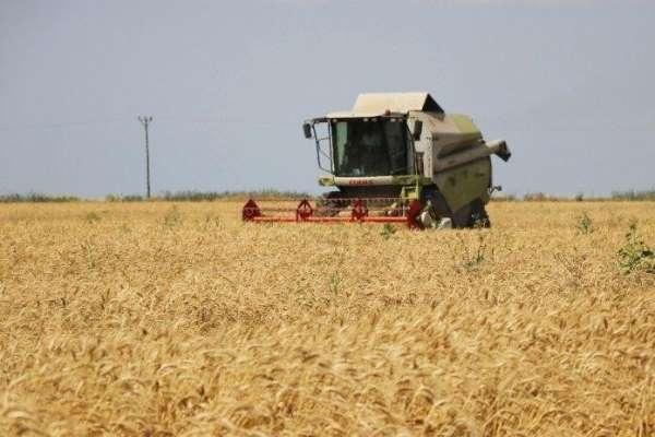 Adana'da buğdayda 750 bin ton rekolte bekleniyor