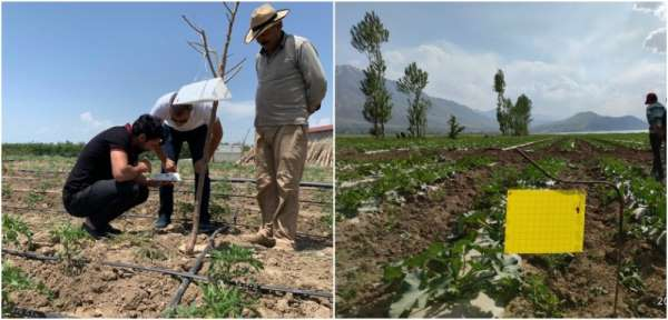 Van'da sebze ekili alanlarda hastalık kontrolü
