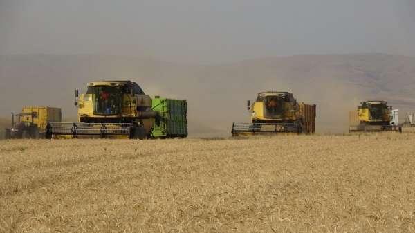 Türkiyenin sertifikalı tohumları Muştan