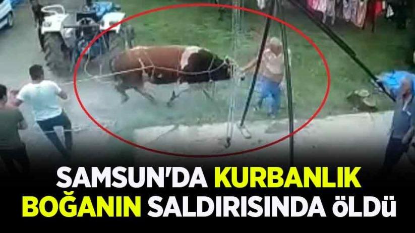 Samsunda kurbanlık boğanın saldırısında öldü