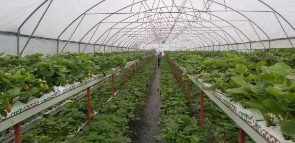 Giresunda yürütülen tarımsal projeler yüz güldürüyor