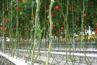 2 bin çiftçi ile 6 milyon metrekare alanda 250 bin ton üretim