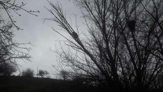Yavru ayı köpeklerden kaçarak çıktığı ağaçta mahsur kaldı, imdadına köylüler yet