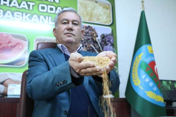Özel İtalyan makarnasına buğday Gaziantep'ten