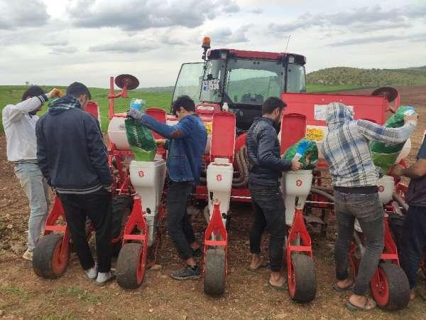 Mazıdağı'nda çiftçiler mısır tohumlarını toprakla buluşturdu