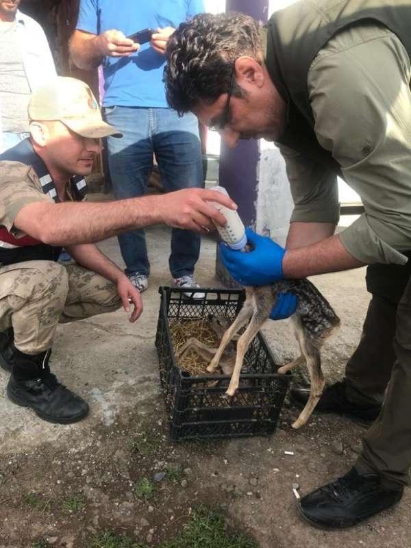 Karaca yavrularına jandarma şefkati