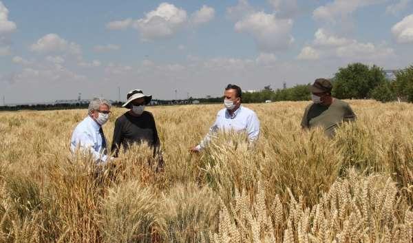 Konya Gıda ve Tarım Üniversitesinin geliştirdiği milli tohumlar toprakla buluşac