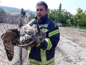 Tele takılan kuşu Suluova itfaiyesi kurtardı
