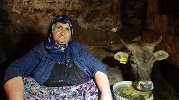 Hacer nine, kurtların saldırısına uğrayan 'Sarı kız' için gözyaşı döküyor