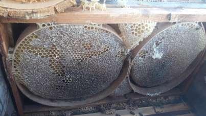 Siirt'te korona virüs kekik bal satışlarını iki kat arttırdı