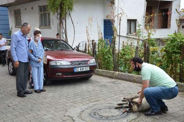 Torpilden gözünü kaybeden çocuk taburcu oldu, dedesi onun için koyun kesti