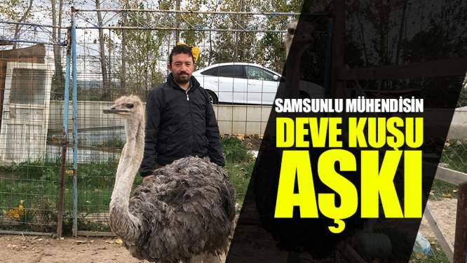 Samsun Haberleri: Belgeselde Gördü, Deve Kuşu Üretimine Başladı