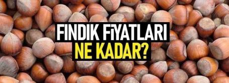 Samsun'da fındık ne kadar? Güncel fındık fiyatları